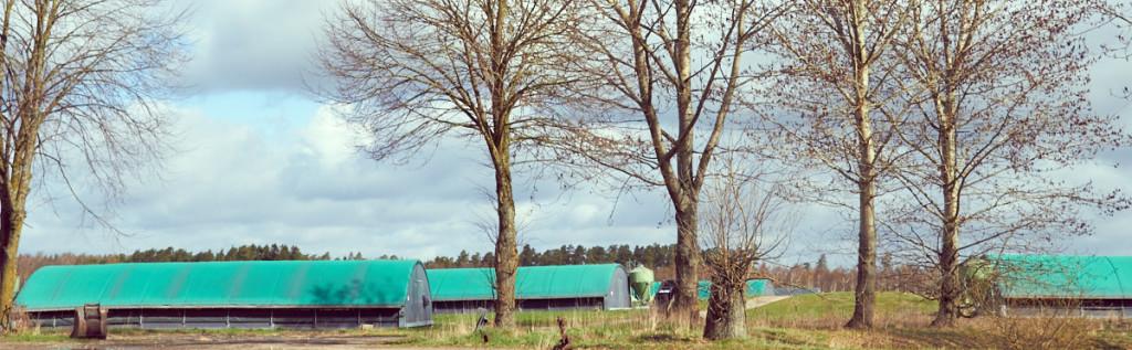 Utomusmiljön på Bosarps gård